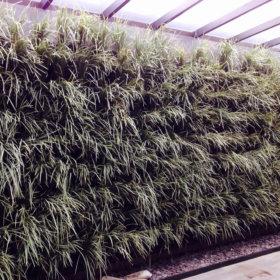 Módulo para jardim vertical em parede verde