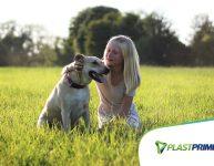 5 plantas que podem fazer mal para animais de estimação