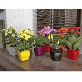 Cachepô plástico com plantas