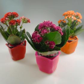 Cachepô plástico com plantas 2