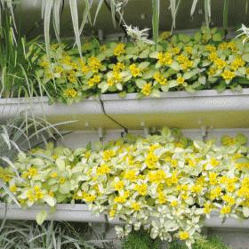 Módulo para jardim vertical com flores 2