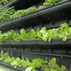 Módulo para jardim vertical com plantas