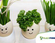 Salsinha e cebolinha: a dupla dinâmica