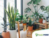 10 tipos de plantas para ambientes internos
