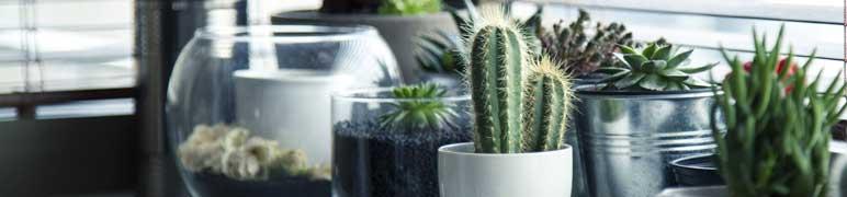 elementos naturais cactos suculenta