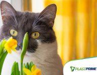 Como ter plantas e animais de estimação em casa?