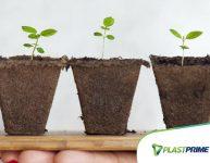 Como controlar pragas e fazer adubação das plantas em casa?