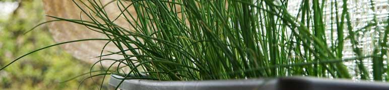 Vaso para horta