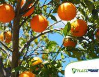 10 frutas para ter no jardim de casa