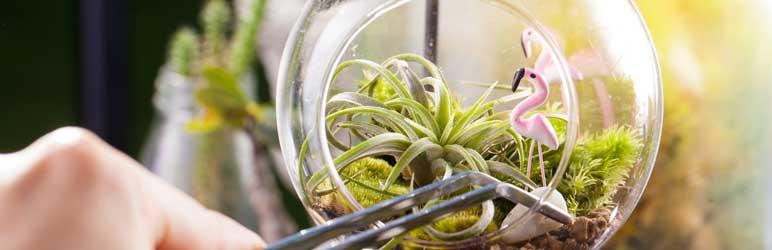 Cuidados com Air Plants
