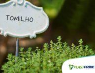 Como cultivar o tomilho: do plantio à poda