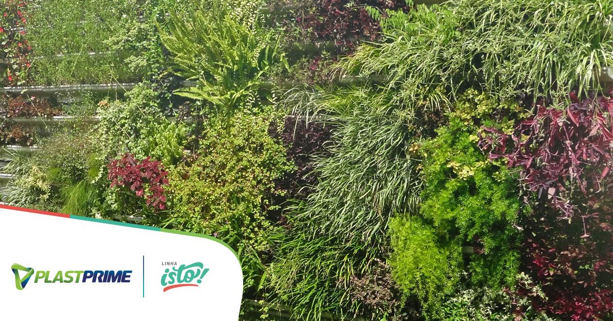 Quais as plantas para jardim vertical mais indicadas?