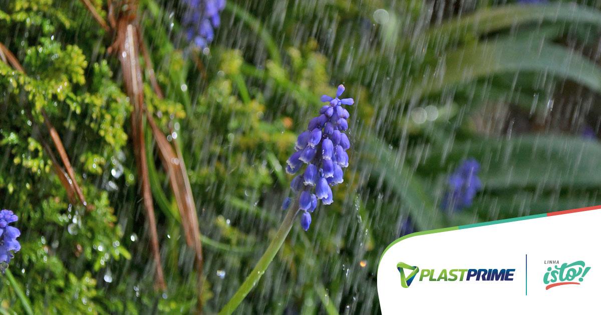 Cuidados com o jardim na estação das chuvas