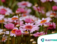 O que e quais são as plantas perenes?