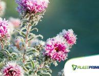 Como proteger as plantas da geada?