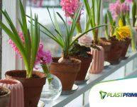 Como escolher o tamanho de vaso certo para cada planta?