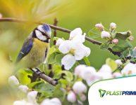 10 plantas que atraem pássaros para seu jardim