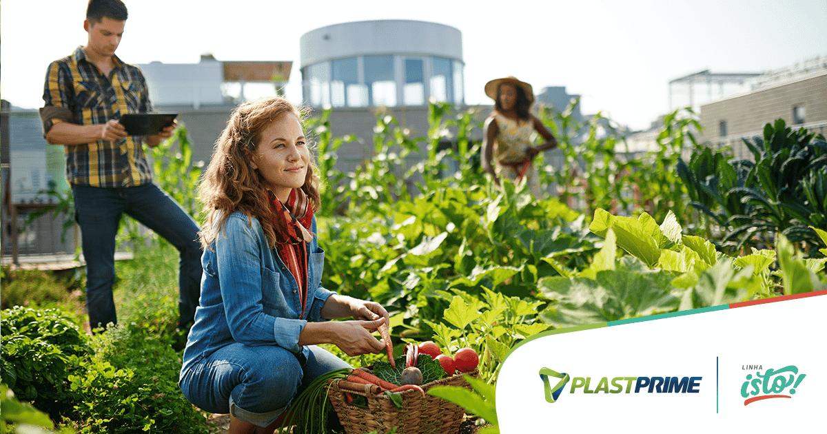 Agricultura urbana: conheça mais sobre essa iniciativa