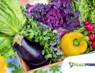 5 dicas para quem quer plantar orgânicos em casa