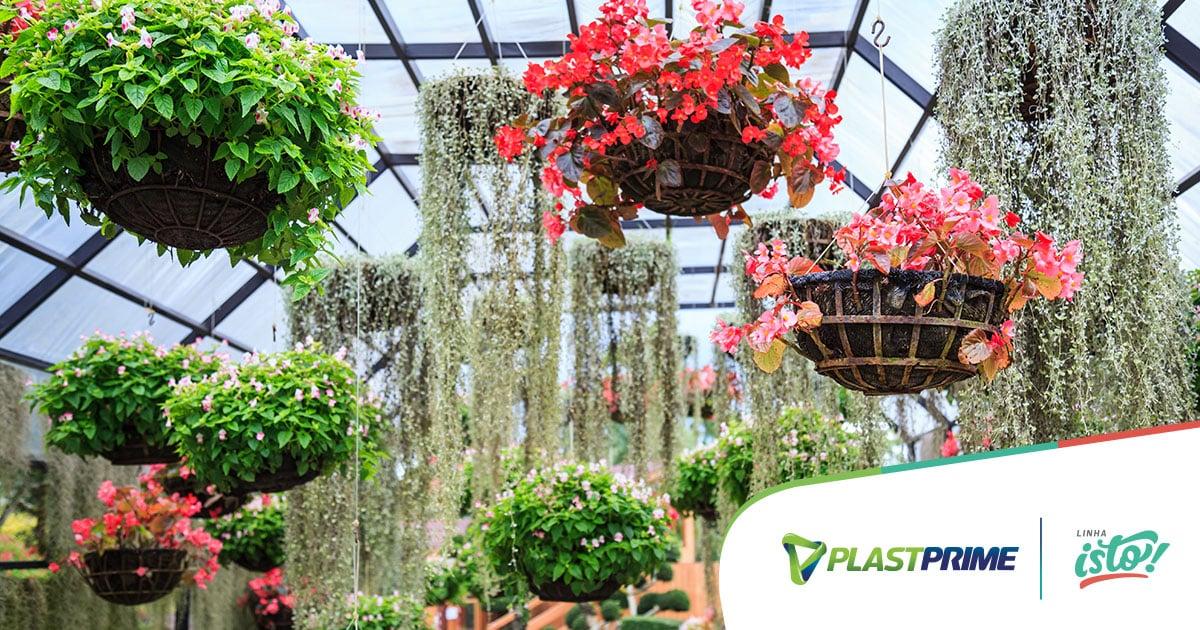 5 tipos de plantas para vasos aéreos