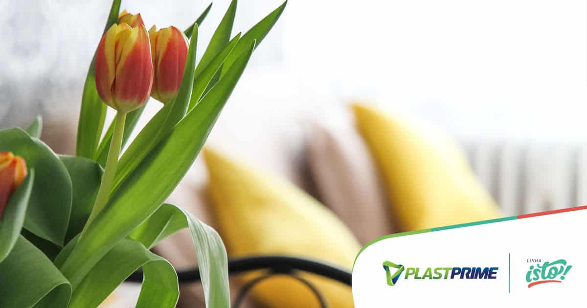 Plantas para apartamento: em quais espécies apostar?