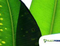 5 sinais de que sua planta está com problema