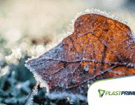 Flores no inverno? Conheça espécies resistentes ao frio