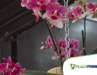 Primavera: Flores para ter dentro de casa!