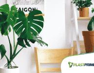 Dicas de decoração: utilizando plantas para decorar!