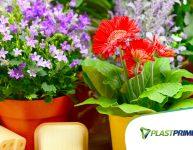 Plantio em vaso: plantas que gostam de sol