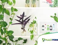 Plantas aromáticas: como cultivar em casa
