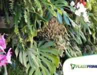 Quais plantas para jardins verticais internos usar?