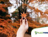 O que plantar no outono: horta e jardim!