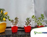 Cuidados básicos para cultivar suculentas em casa