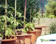 5 hortaliças para plantar em vasos na sua horta em casa