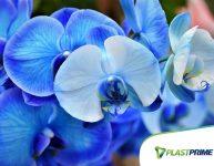 Como cuidar de orquídeas?