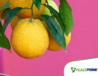 5 plantas frutíferas para plantar em vasos