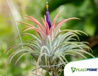 Air plants, as plantas que ficam no ar!