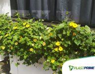 Plantas para floreira: plantio e cuidados básicos